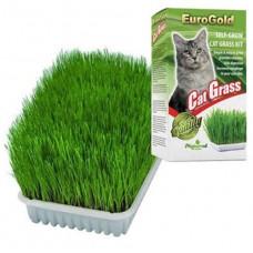 EUROGOLD CAT GRASS SİNDİRİM VE TÜY YUMAĞI DESTEKLEYEN KEDİ ÇİMİ